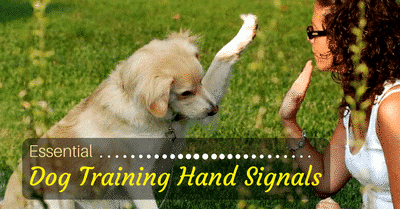 dog trainer Raleigh NC